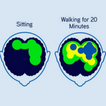 the-difference-in-the-brain-between-sitting-and-walking-for-20-minutes